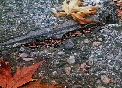 leaves, ground, fallen leaves - desktop wallpaper