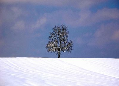 nature, winter, snow, trees, Earth, outdoors - desktop wallpaper