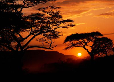 sunrise, landscapes, nature, trees, silhouettes, Serengeti - random desktop wallpaper