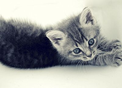 cats, animals, feline, kittens, pets - related desktop wallpaper