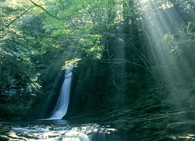 trees, forests, sunlight, waterfalls - related desktop wallpaper