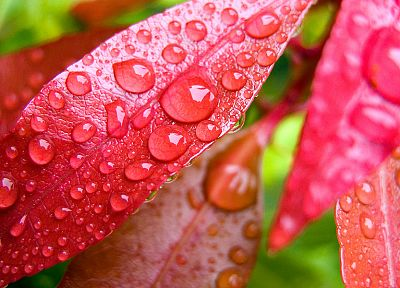 water, leaves, wet, water drops, macro, condensation - related desktop wallpaper