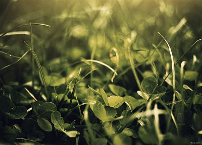 green, nature, leaves, grass, plants, macro - related desktop wallpaper