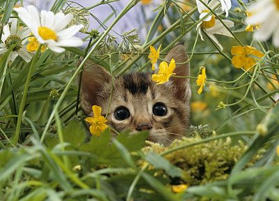 kittens, yellow flowers, white flowers - desktop wallpaper