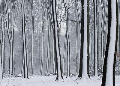 snow, trees - random desktop wallpaper