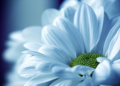 close-up, nature, flowers, white flowers - random desktop wallpaper