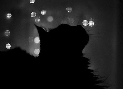 cats, silhouettes, grayscale - related desktop wallpaper
