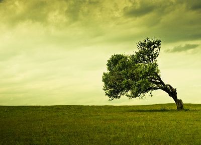 green, nature, trees - related desktop wallpaper