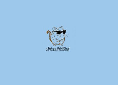 minimalistic, glasses, funny, sunglasses, Chinchilla, blue background - random desktop wallpaper