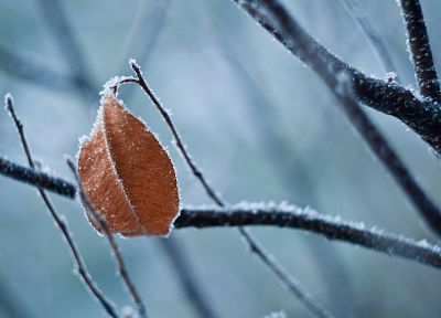 nature, leaves, frozen - desktop wallpaper