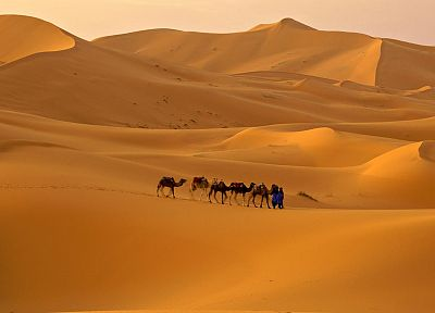 landscapes, sand, deserts, camels - desktop wallpaper