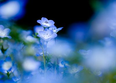 blue, nature, flowers, macro, blue flowers - related desktop wallpaper