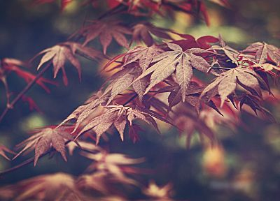 nature, leaves - random desktop wallpaper