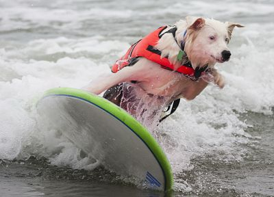 animals, dogs, pets, beaches - related desktop wallpaper